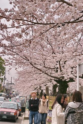 【写真】2013 桜 : 哲学の道/2018-12-24/IMGP9249