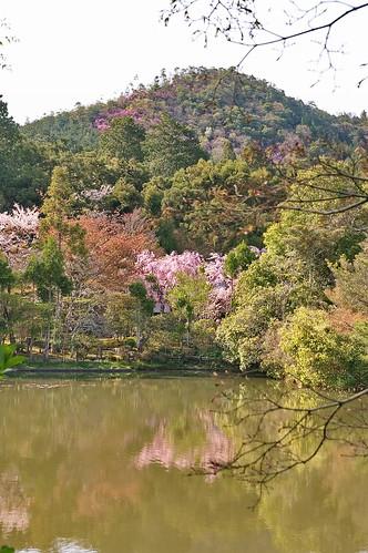 【写真】2013 桜 : 龍安寺/2020-01-22/IMGP9847