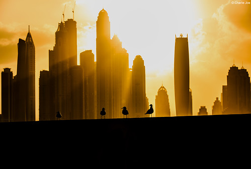 morning birds silhouette skyscraper sunrise dubai uae dubaimarina palmjumeirah princesstower