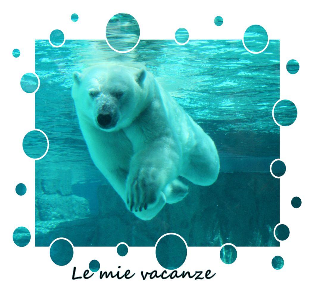 Vacanze orso