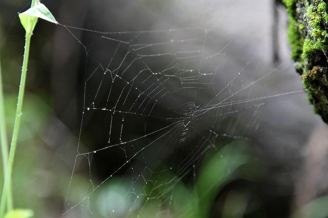 1237 spiderweb