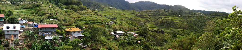 maligcong rice terraces bontoc mountain province