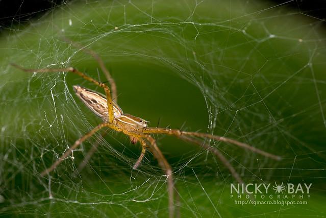 Nursery WebSpider (Pisauridae) - DSC_3745