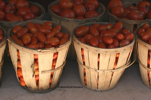 Bellewoodgardens_Traugers_Tomatoes