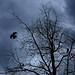 Dead tree and black birds by Moochin Photoman