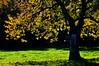 autumn backlight...