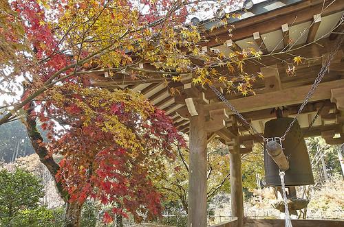 【写真】紅葉 : 浄蓮華院