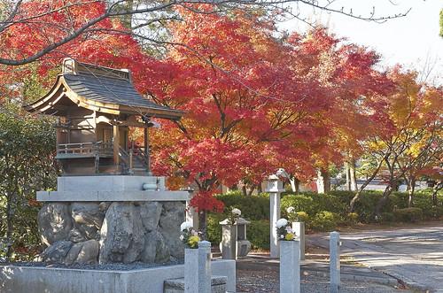 【写真】2013 紅葉 : 妙顕寺/2020-11-01/IMGP4136