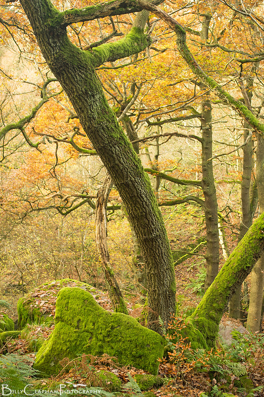 Green and orange autumn woodland landscape photography by Billy Clapham, Padley Gorge, Billy Clapham