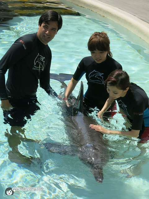 dolphin singapore