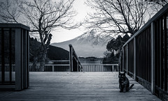 friendly cat & Mt.Fuji