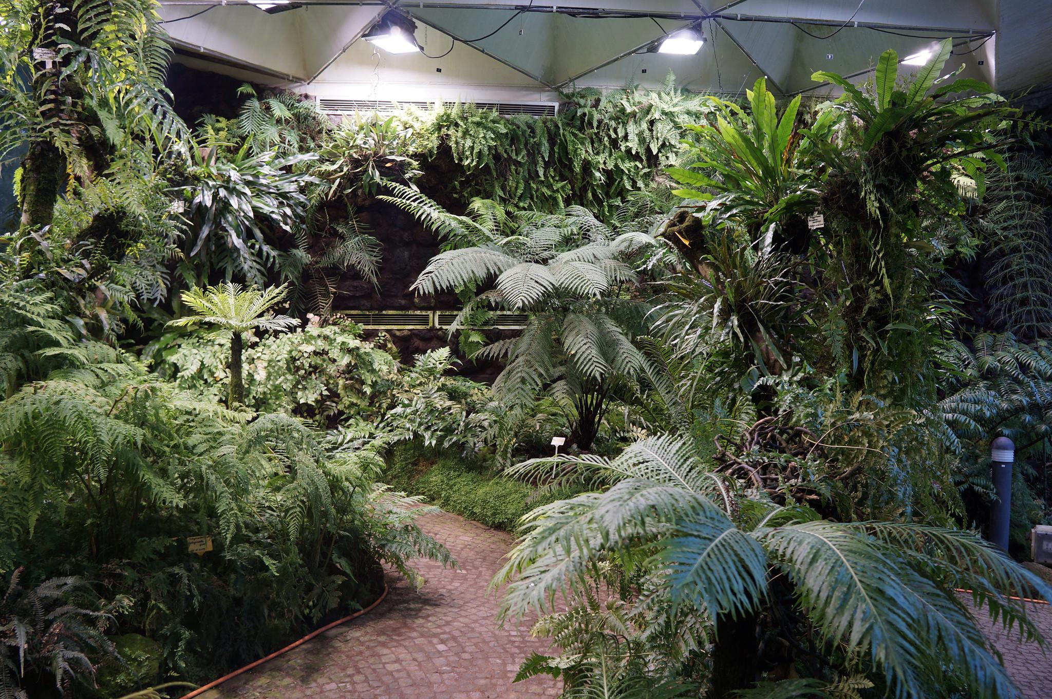 ferns planten un blomen greenhouse explore ml flickr photo sharing. Black Bedroom Furniture Sets. Home Design Ideas