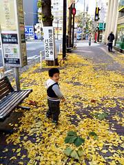 正月三が日のとらちゃん 2014/1