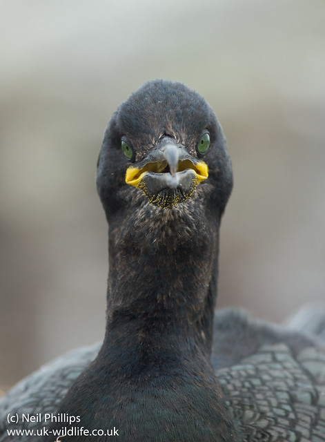shag close up-4