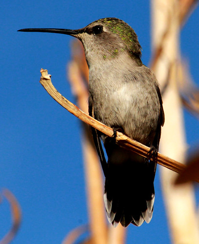143092-1.jpg by Robert W Gilcrease
