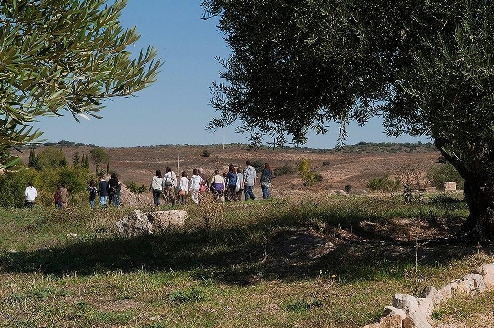 4. Excursión por olivos centenarios. Autora, Isabel Queral