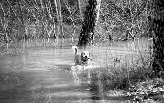 Edo the swamp dog FX3 135mm 014