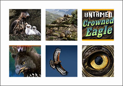 free Untamed Crowned Eagle slot game symbols