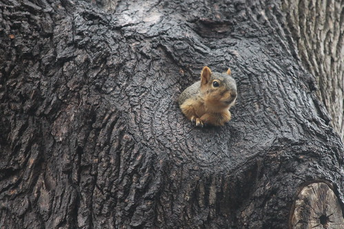 Best Squirrel House at the University of Michigan (April 4, 2014)