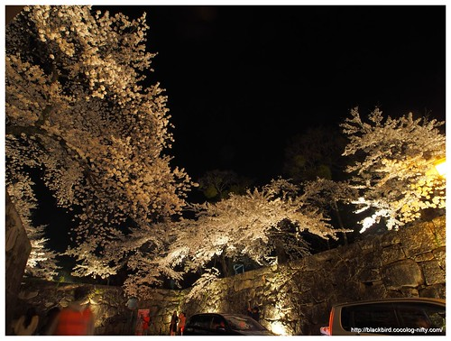 Cherry blossoms in the night #03