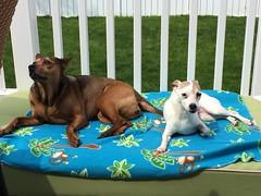 Ellie & Gracie