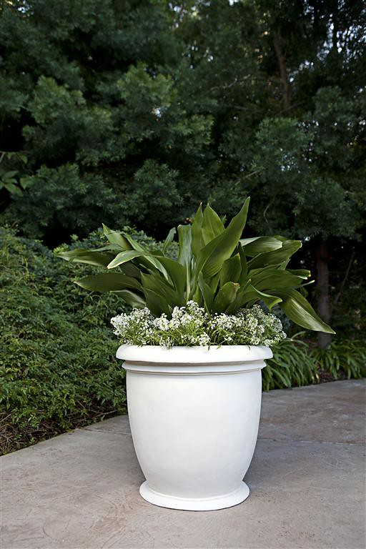 Egg Cup Planter