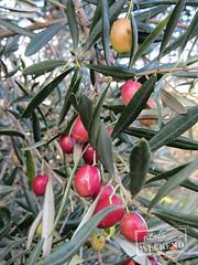 Wilson Botanic Park, Berwick (Victoria, Australia)