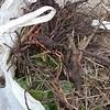 09b Root