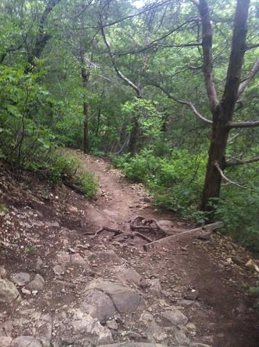 Cedar Ridge Trail Race 36 KM