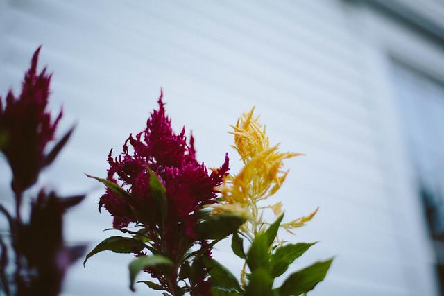 e's flowers