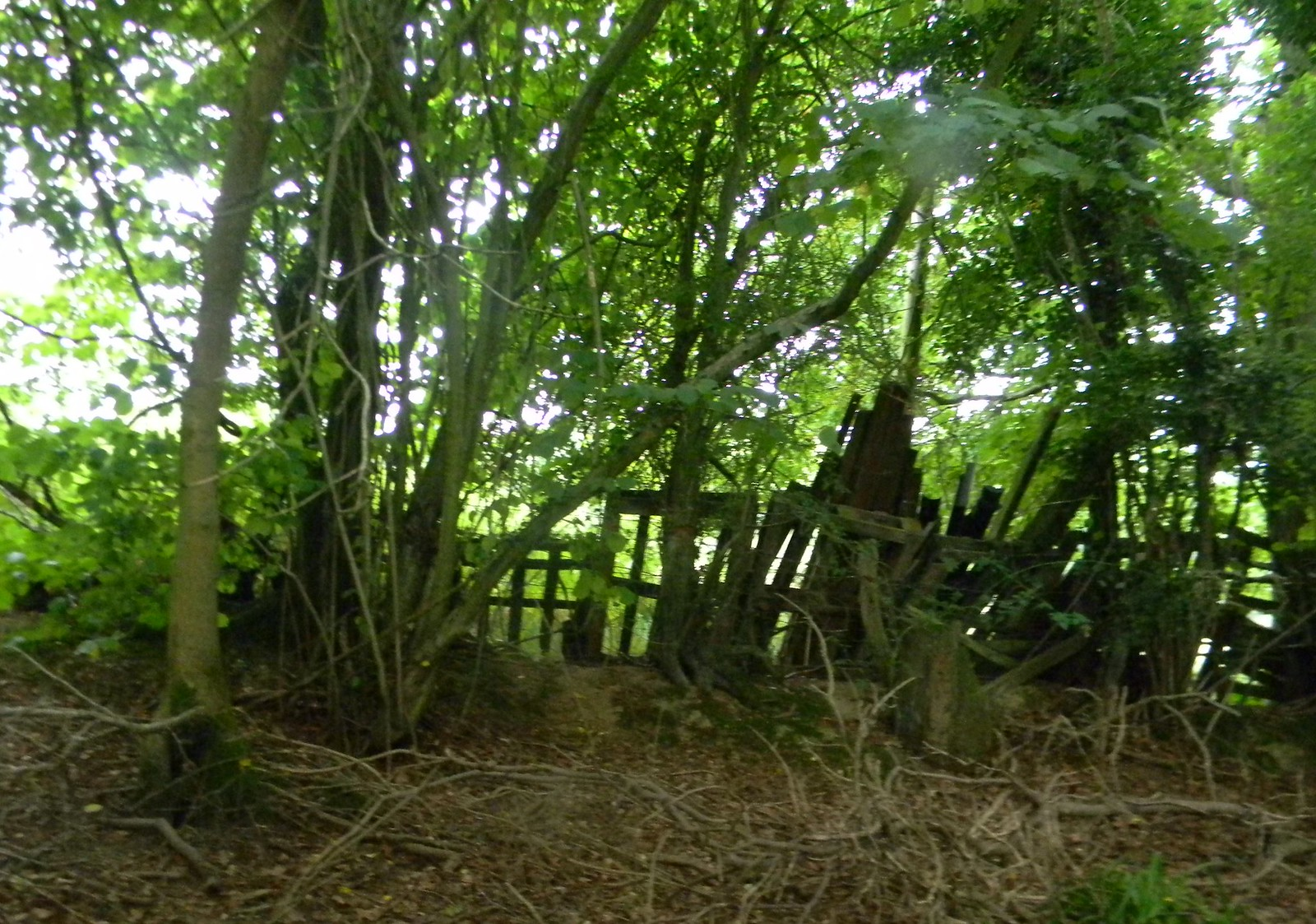 Ramshackle fence 2 Wadhurst Circular