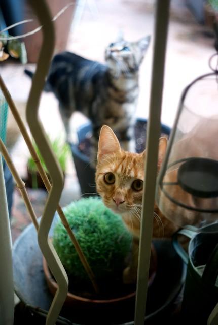 アパートの中庭にいる猫。にゃあ。