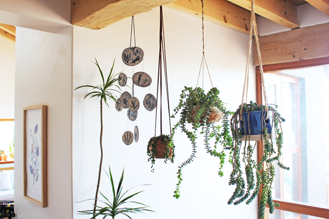 Happy hanging plants
