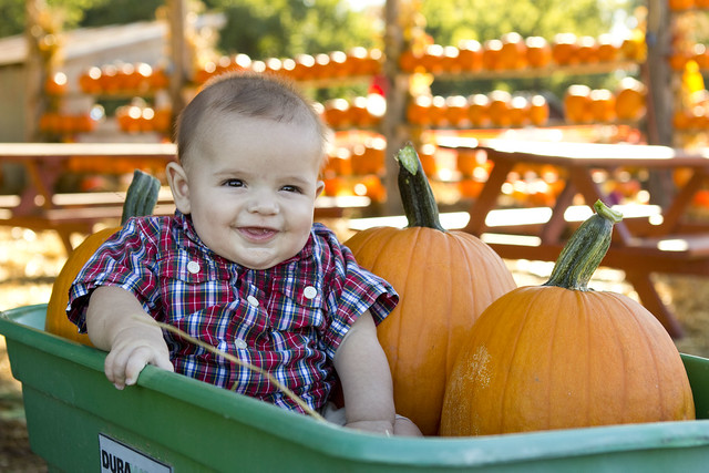pumpkinpatch2013_adollopofmylife_57