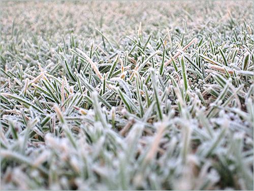 grassfrost