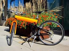 My Montague Bike