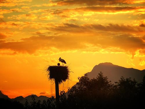 sunset sky italy bird nature clouds italia day nest cloudy stork cegonha cigüeña friuli storch cigogne ooievaar fagagna cicogna oasideiquadris feagne magicunicornverybest magicunicornmasterpiece crazygeniuses