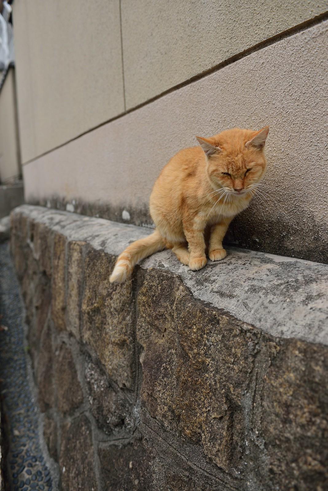 猫坂道~尾道~