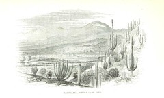 Image taken from page 451 of 'Personal Narrative of Explorations and Incidents in Texas, New Mexico, California, Sonora, and Chihuahua, connected with the United States and Mexican Boundary Commission, during the years 1850, '51, '52 and '53. [With plates