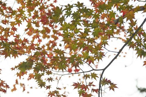 【写真】2013 紅葉 : 白沙村荘/2020-12-28/IMGP3712