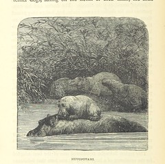 Image taken from page 412 of 'Great African Travellers from Mungo Park to Livingstone and Stanley, etc'