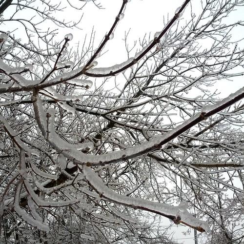 ice-storm-ontario-2013