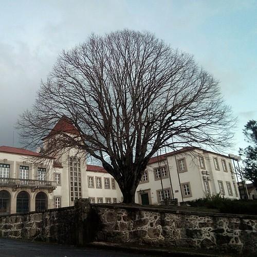 C.M.Tábua #beira_alta #tabua#portugal#tree