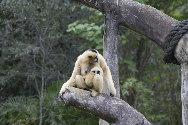 Zoo Miami 2014