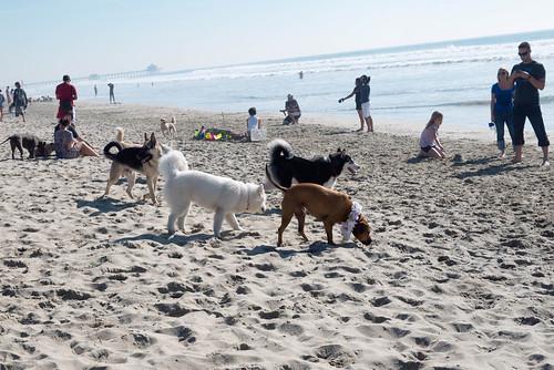 dogbeach26