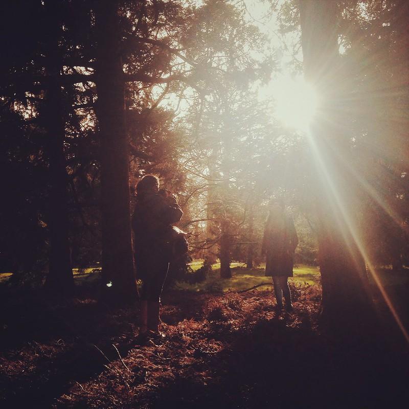 redwoodsinsta