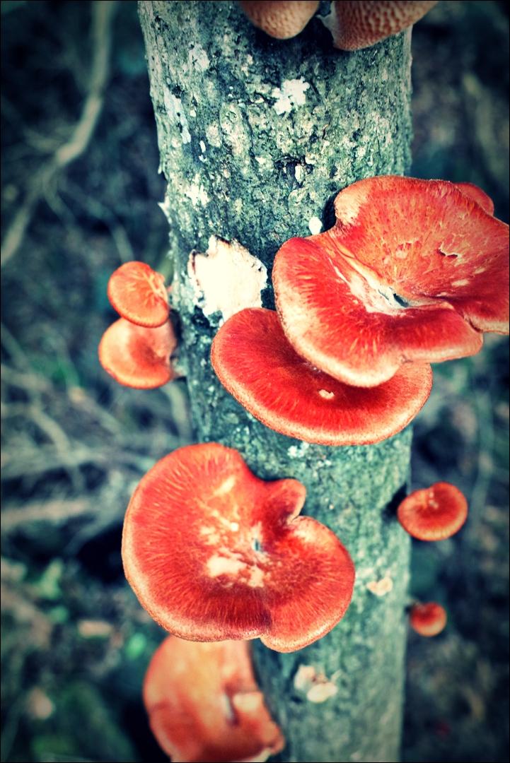 버섯-'제주도 거문오름'