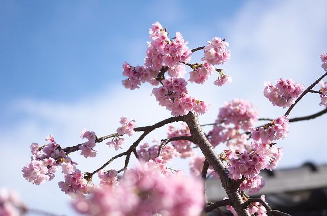 東京路地裏散歩 谷中・上野編 2014年3月21日