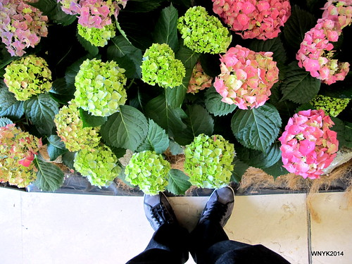 Flowers at my Feet