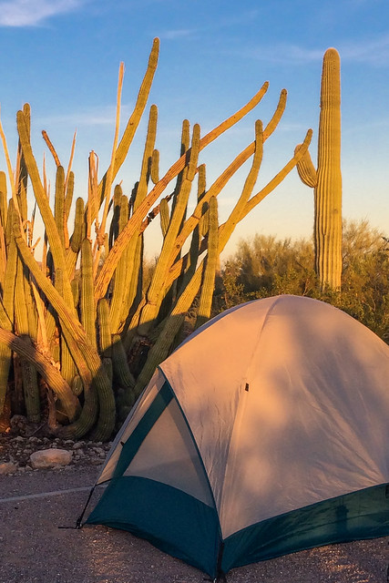 Camping with Cacti
